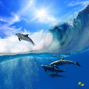 Beautiful_Dolphins_at_Bahamas